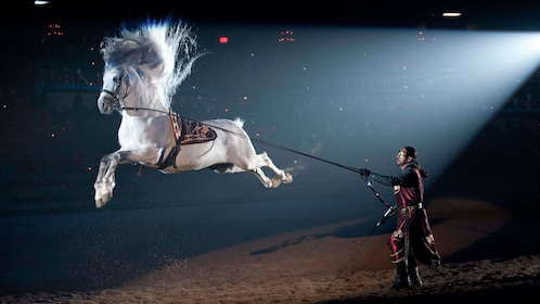 White horse performing a jump trick at Medieval Times in Chicago