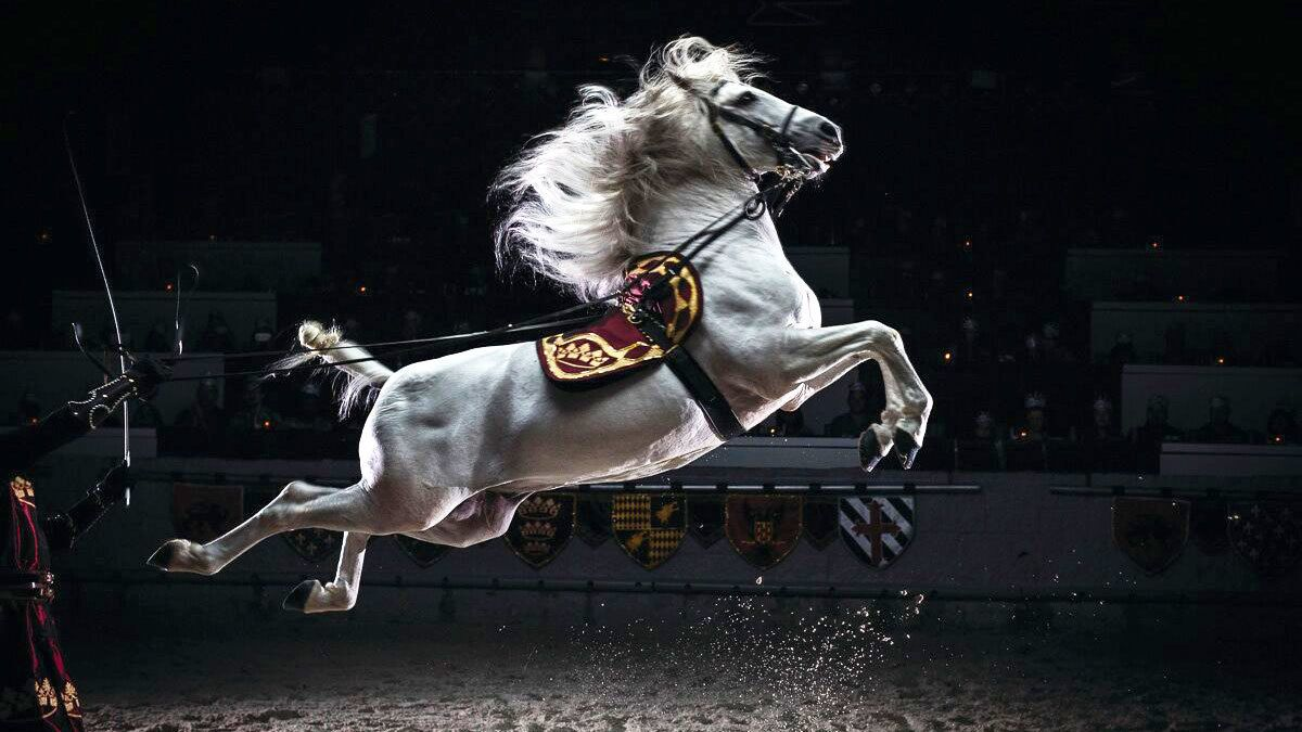 Horse show at Medieval Times in Kissimmee