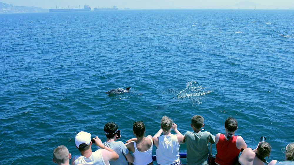 cruise passengers spotting dolphins in the water in Malaga