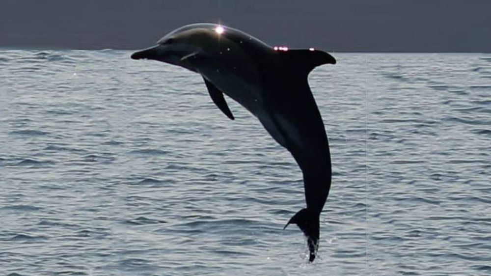 Dolphin jumping out of the water in Gibraltar