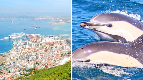 Combo image of Gibraltar and Dolphin Tour