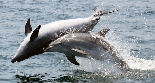 Dolphins in Gibraltar