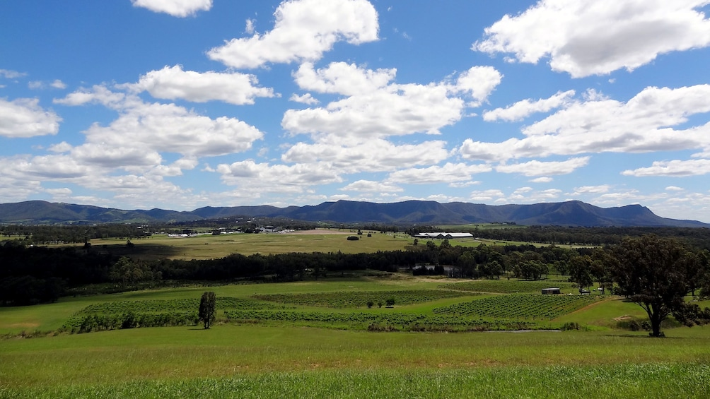 Show item 3 of 8. Panoramic view of the vineyards in the Hunter Valley Region of Australia on a sunny day