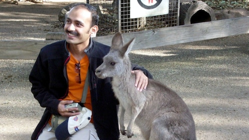 Man sitting with a kangaroo in the Blue Mountain in Australia
