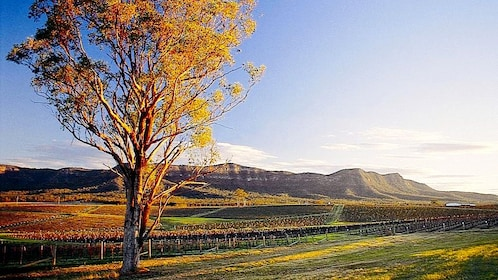 Scenic view of the Hunter Valley vineyards