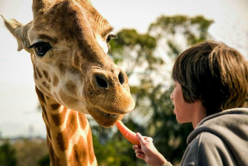 Taronga Zoo Ticket with Hop-On Hop-Off Explorer Cruise