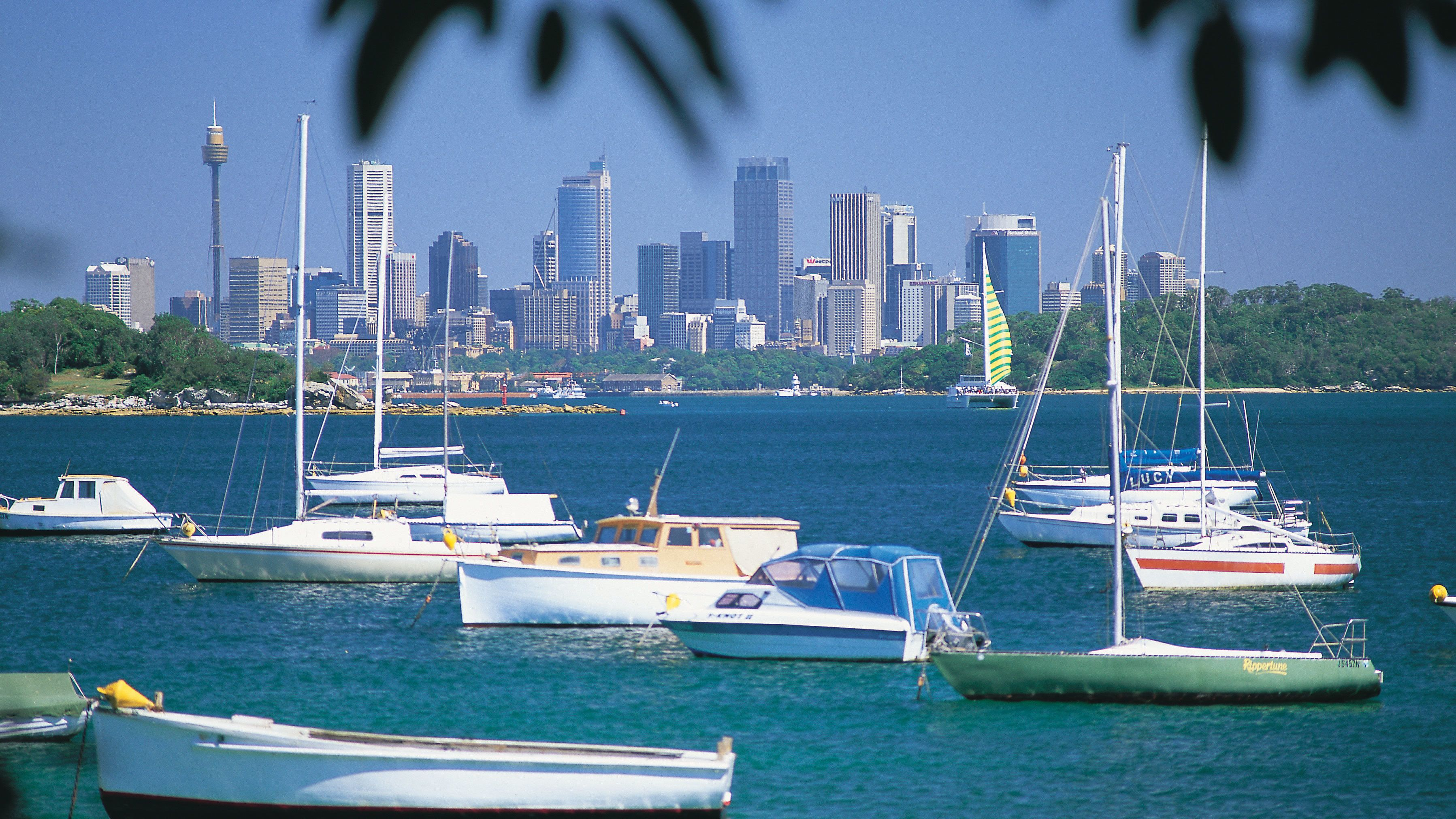 Sailboats on the beautiful waters of the Sydney Harbour with a wonderful view of the city buildings in the distance