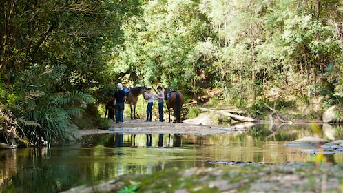Group with horses at bank of a river in Sydney