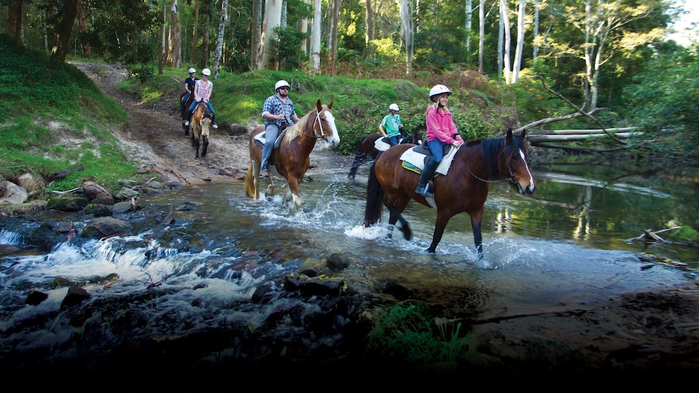 Show item 2 of 6. Group of horseback riders on a riding adventure through the acres at Glenworth Valley