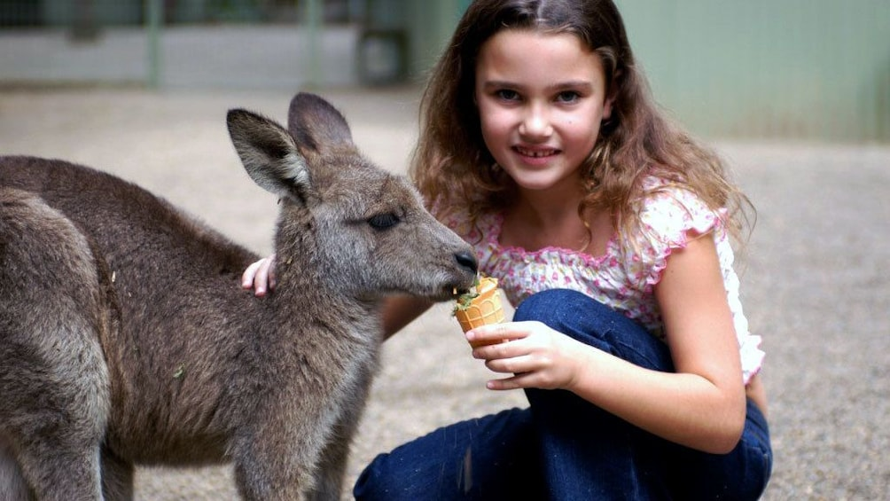Show item 2 of 8. Smiling girl feeds a small kangaroo in Sydney