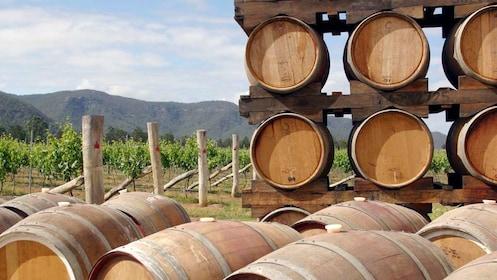 Wine barrels at the Hunter Valley wine region in Australia