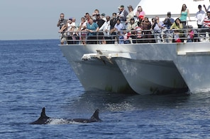 Port Stephens Dolphin Watching by Gray Line