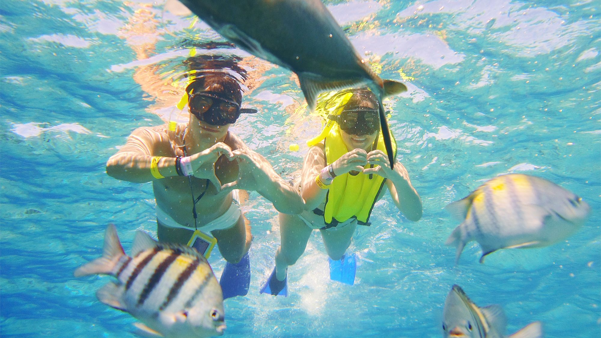 Snorkelers swimming with fish in Cozumel