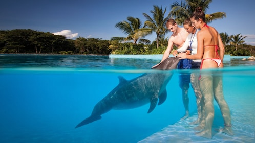 People with trainer and dolphin at Dolphinaris Cancun