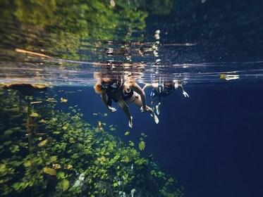 nado-xenotes-03.jpg