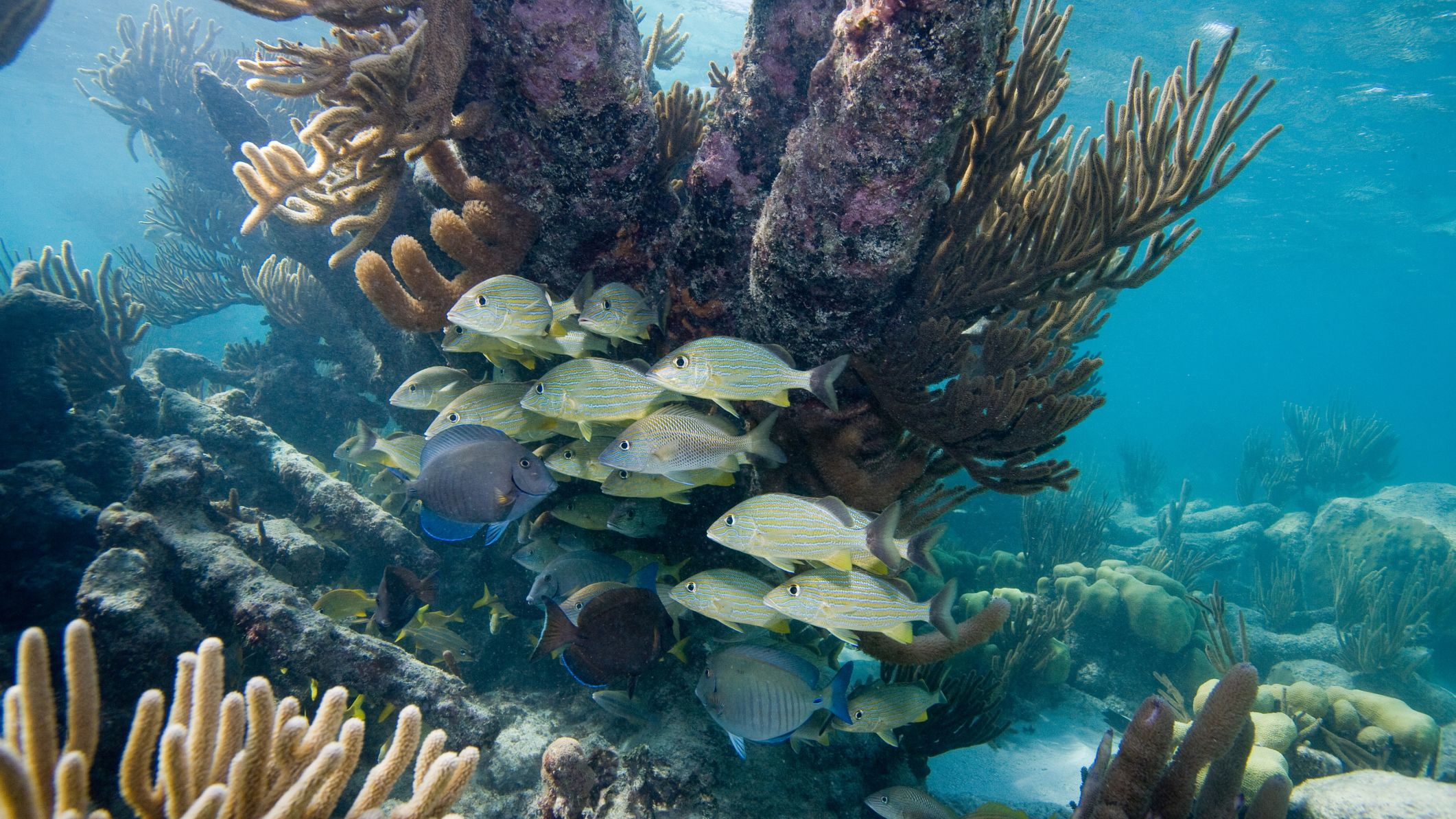 Tropical fish swimming amongst coral in Cancun