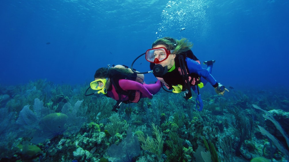 Scuba divers swimming over a coral reef in Cancun