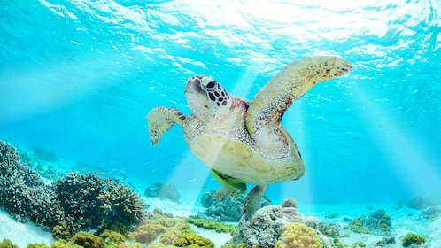 Sea turtle swimming in the bright blue waters of Cancun