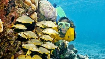 Excursión Snorkel Xtreme: esnórquel, tirolina, rappel y almuerzo