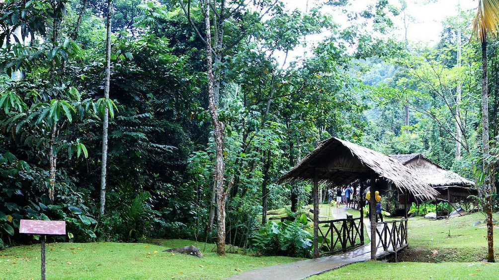 Show item 3 of 5. small walking trail in Kota Kinabalu