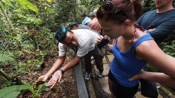 Kinabalu Park & Poring Hot Springs Venture