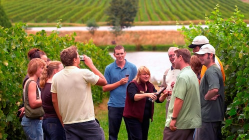 Wine tasting group walking among the vines at a winery in Yarra Valley