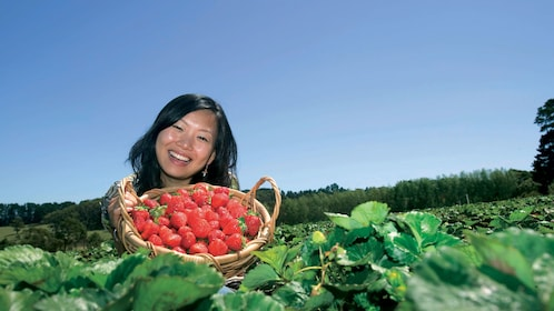 Woman holding a basket of fresh-picked strawberries in a field in Mornington
