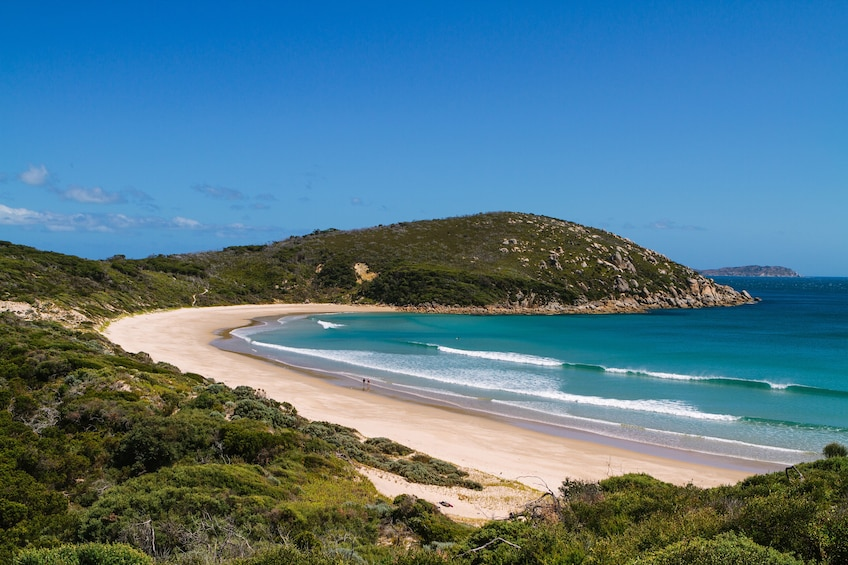 Show item 2 of 10. 2 Day Phillip Island & Wilsons Promontory National Park Trip
