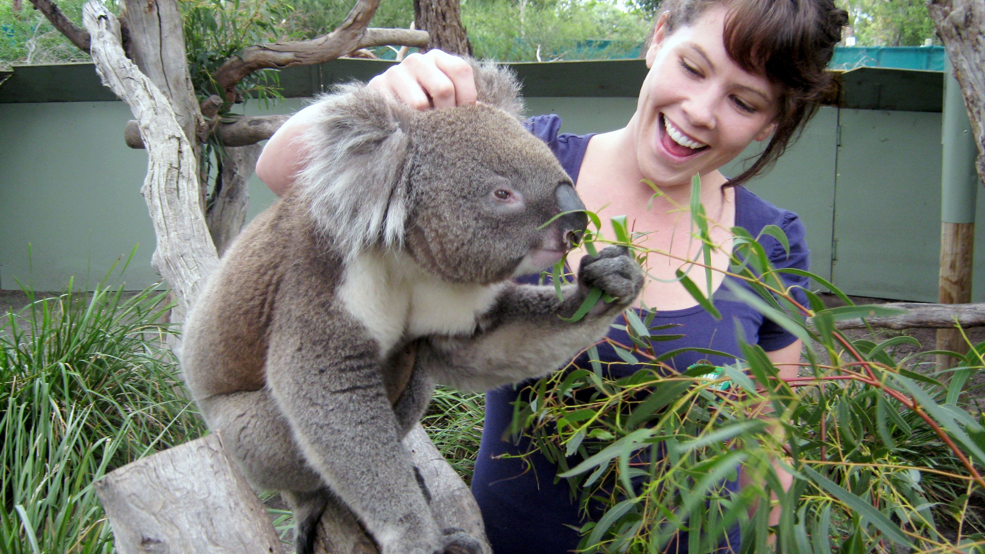Smiling woman petting a koala bear on the head on Phillip Island in Australia