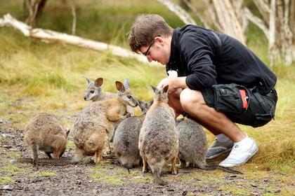 Feeding Wallabies at Moonlit Sanctuary.jpg