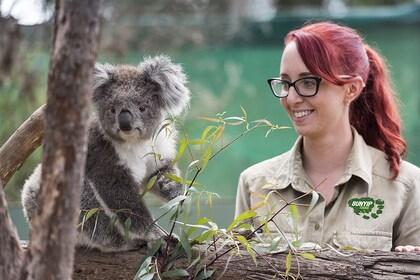 Moonlit Koala Bunyip.jpg