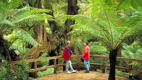 Couple on a self-guided tour of the lush forest of Great Otway National Park