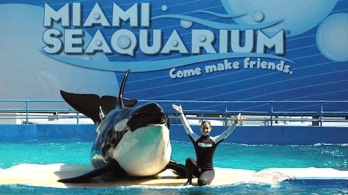 Killer whale poses with trainer at the Seaquarium in Miami