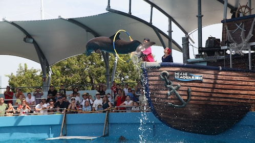 Dolphin jumping through hoops at the Seaquarium in Miami