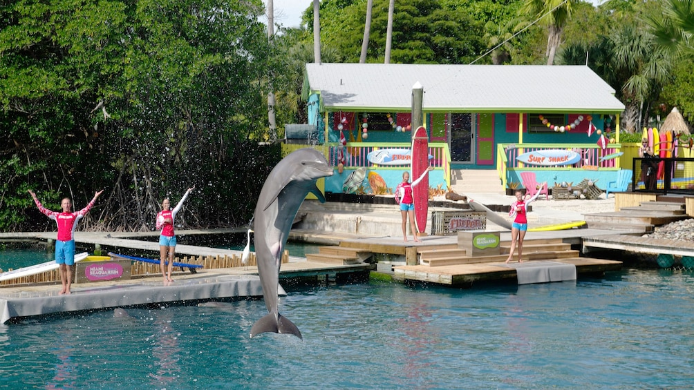 Dolphin trainers cheering at the Seaquarium in Miami