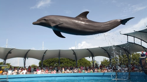 Jumping dolphin at the Seaquarium in Miami