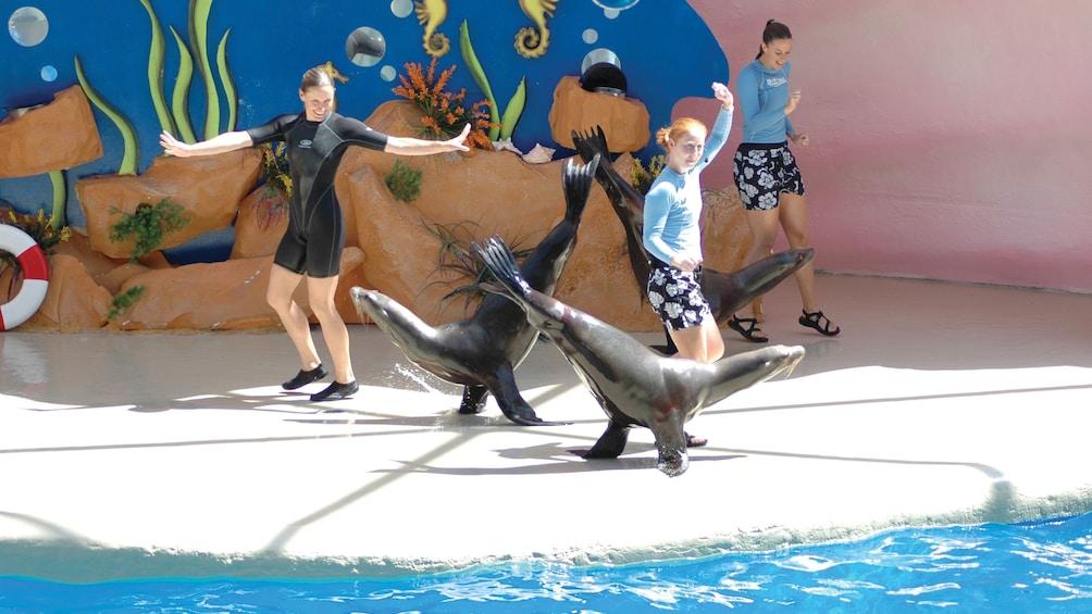 Sea lions doing tricks at the Seaquarium in Miami