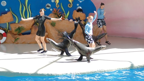 Sea lions doing tricks at the Seaquarium in Miami