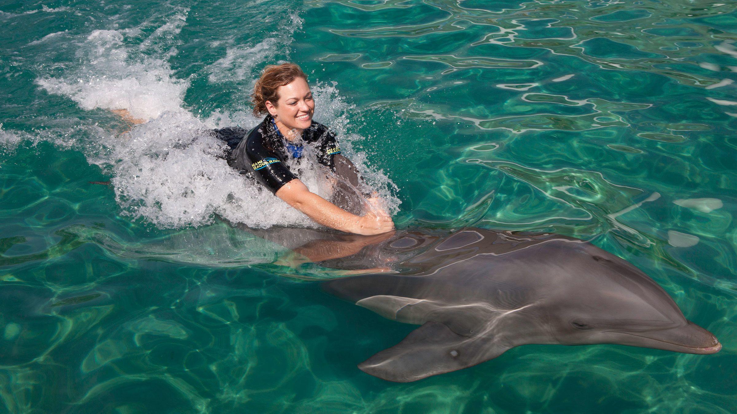 Dolphin Odyssey en el Miami Seaquarium
