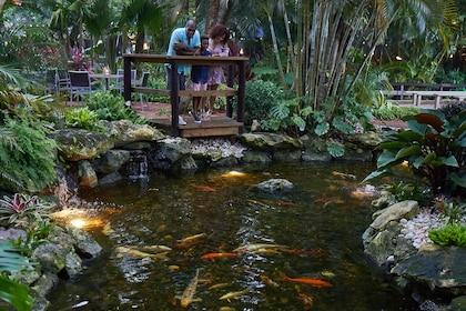 jungle-queen-nightime-family-koi-pond-view-1.jpg