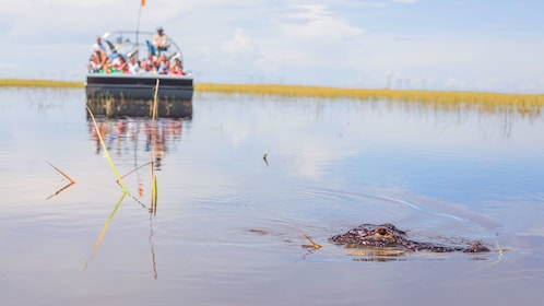 Alligator surfaces near an Airboat