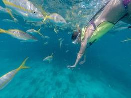 Schnorchel- und Segelausflug im Katamaran am Vormittag zum Florida Reef ab ...