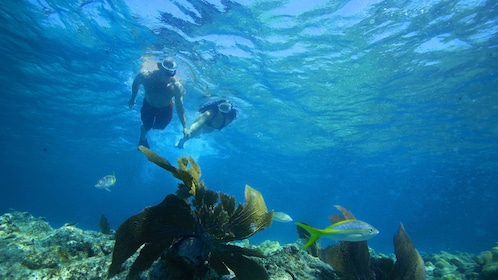 Snorkeling couple exploring shallow waters in Key West