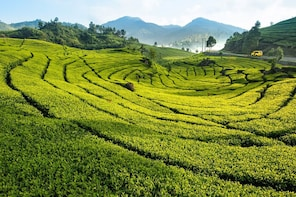 Private Tour Puncak Tea Plantation & Safari Garden