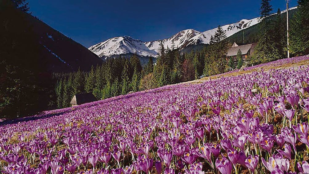 Foto 3 van 10. Tatra mountain view