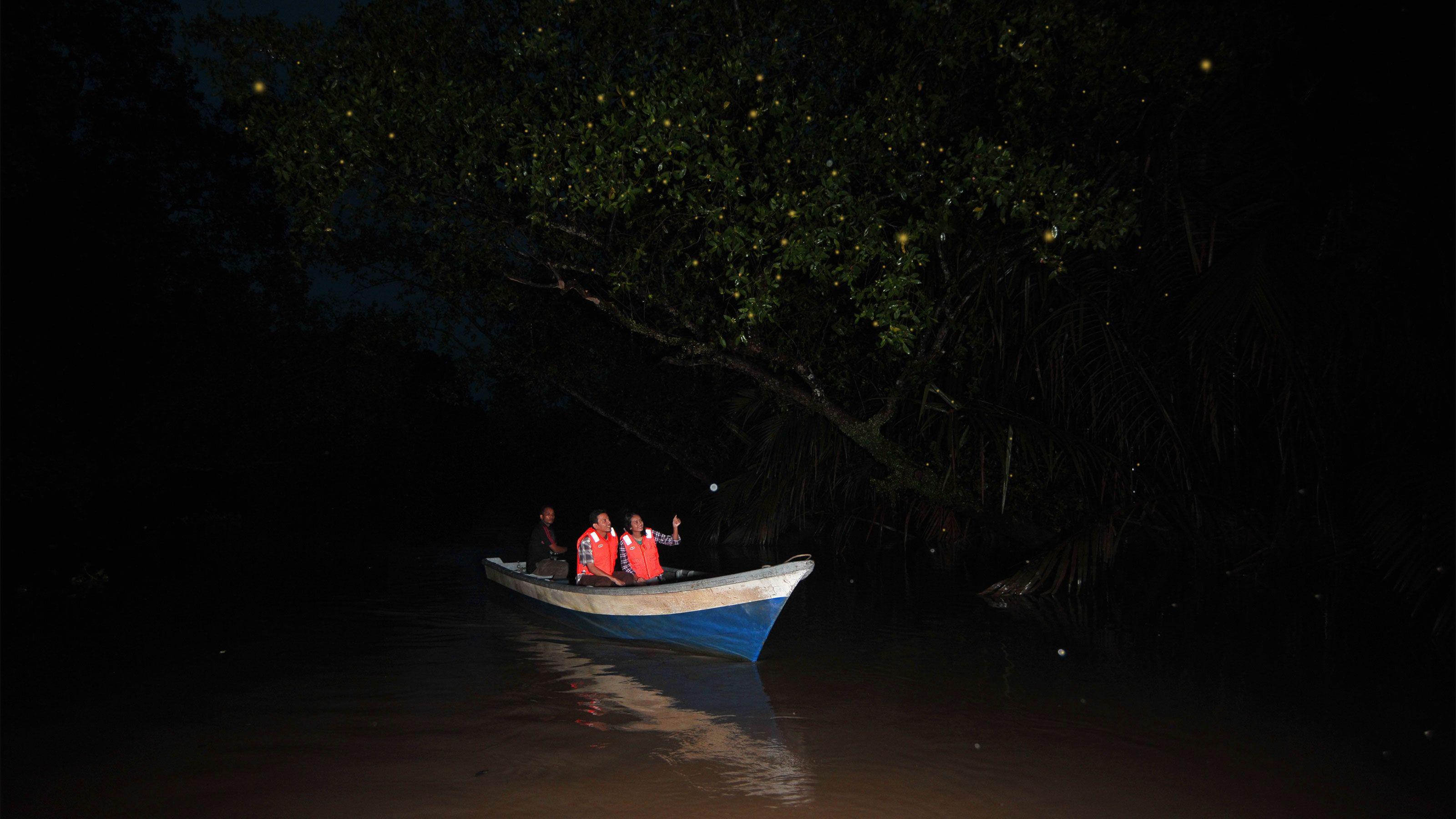 Glittering Fireflies & Kuala Selangor Night Tour with Dinner