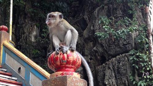 monkey in kuala lumpur