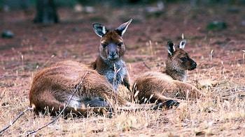 Kangaroo Island Life Day Tour with Lunch