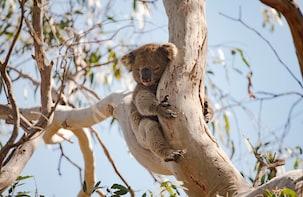 Kangaroo Island 'Island Life' Full Day Tour