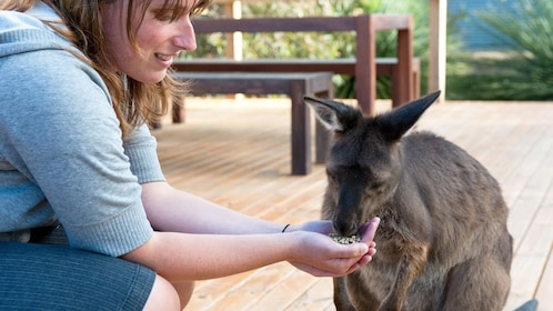 A woman feeding a baby kangaroo on Kangaroo island